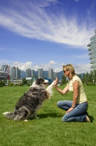 Nina Houghton, Professional Dog Trainer